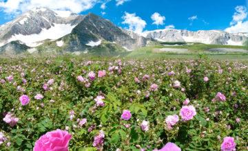 Долина роз. България